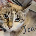 Image of Toastie