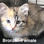 Image of Bronze