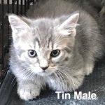 Image of Tin