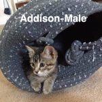 Image of Addison