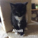 Image of Alcott