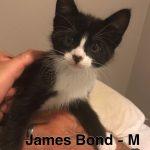 Image of James Bond