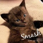Image of Reserved - Smash