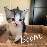 Image of Boom