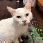 Image of Skye