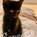 Image of Reserved -Espresso