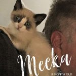 Image of Meeka