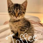 Image of Toffee