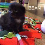 Image of Bean