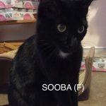 Image of Sooba