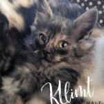 Image of Klimt