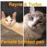 Image of Rayna and Turbo