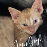 Image of Van Gogh
