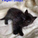 Image of Fagan