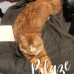 Image of Reserved - Blaze