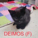 Image of Deimos