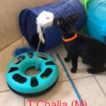 Image of T'Challa