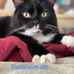 Image of Denisovitch