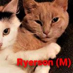 Image of Ryerson