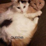 Image of Queens