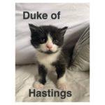 Image of Duke of Hastings