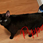 Image of Pippa