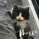 Image of Mazzy