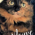 Image of Neave (Reserved)