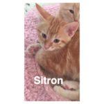 Image of Sitron