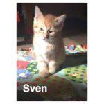 Image of Sven