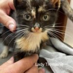Image of Lady Tremaine (Reserved)