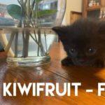 Image of Kiwifruit (Reserved)