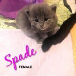 Image of Spade (Reserved)