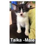 Image of Taika