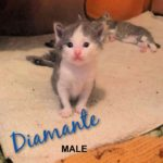 Image of Diamante (Reserved)