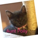 Image of Aunt Polly