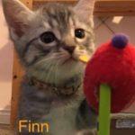Image of Finn Shelby