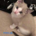 Image of Fern