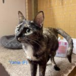 Image of Yzma (reserved)