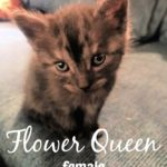 Image of Flower Queen (Reserved)