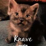 Image of Knave