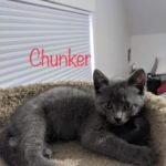 Image of Chunkers (reserved)