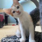 Image of Dexter (Reserved)