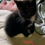 Image of Kimmy (reserved)