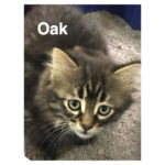 Image of Oak
