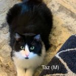 Image of Taz (Reserved)