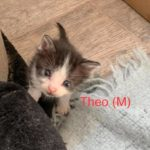 Image of Theo (reserved)