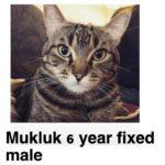Image of Mukluk (Reserved)