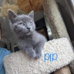Image of Pipsqueak (reserved)