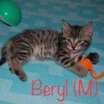 Image of Beryl